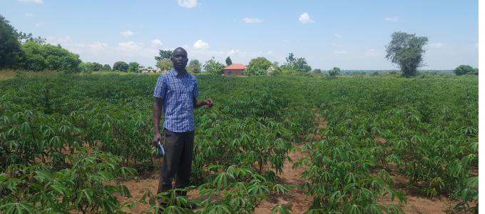 Nyero  Sub County Cassava Demonstration Garden